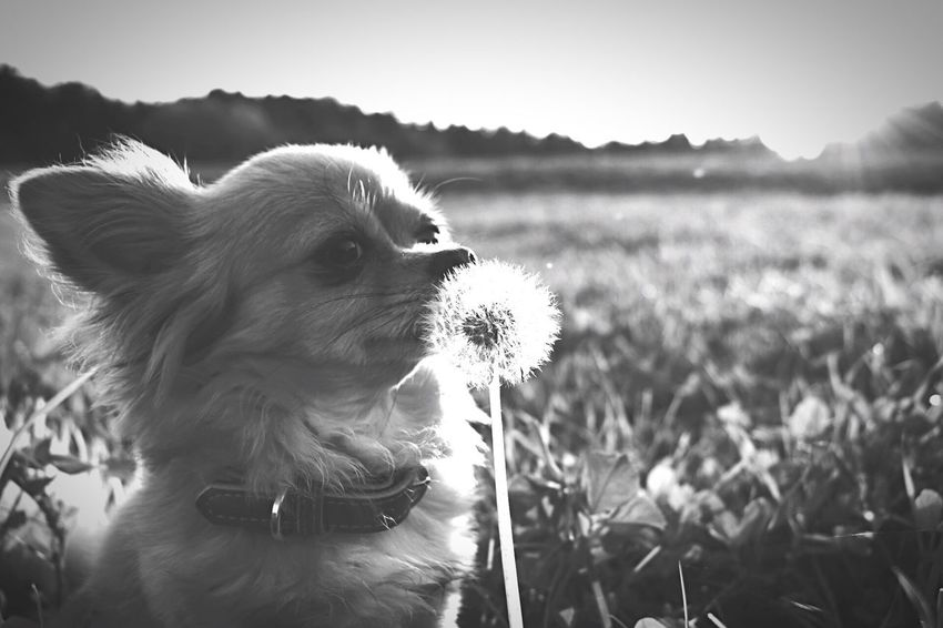 EyeEm Selects Dog Blackandwhite EyeEmNewHere Focus On Foreground Field Pets Domestic Animals One Animal Animal Themes Mammal No People Day Outdoors Nature Sky Close-up Grass
