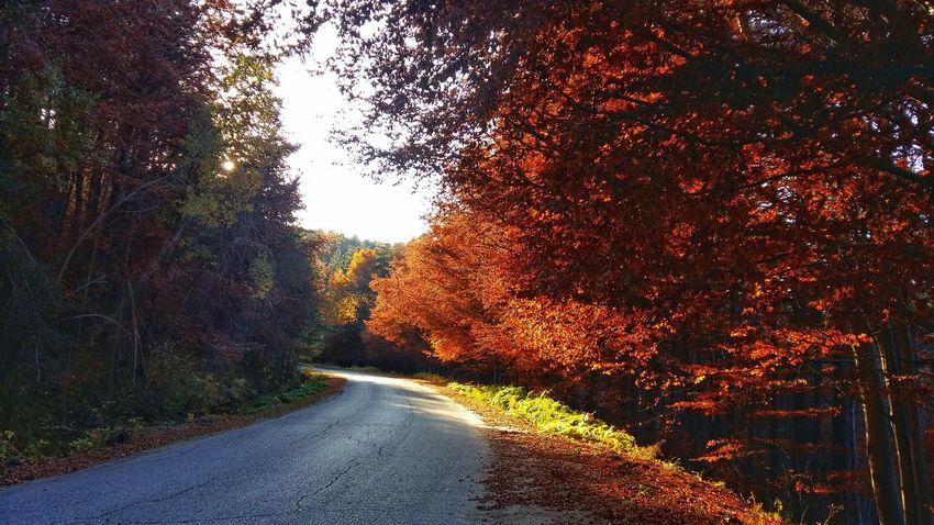 Rodopi Mountain Naturephotography Road The Way Forward Beauty In Nature