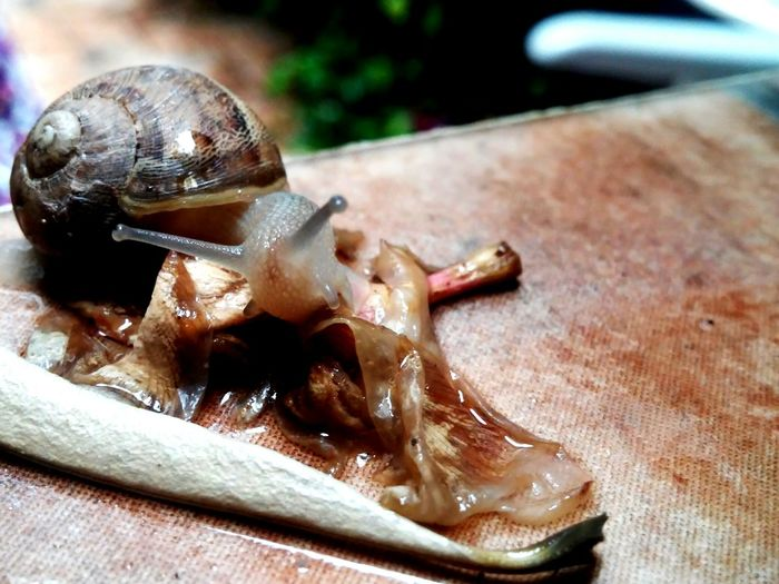 Nature Life Is Beautyful Caracol