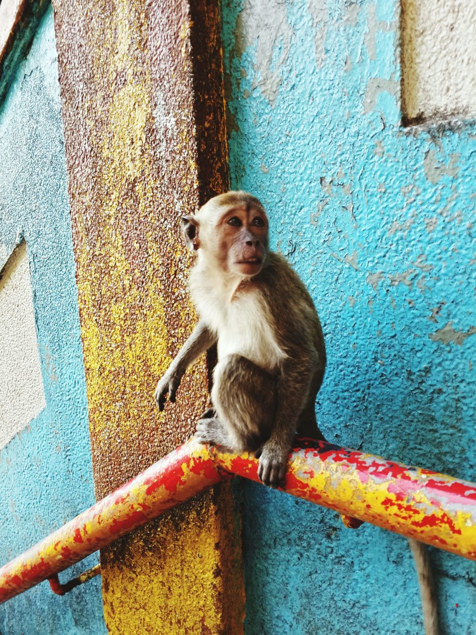 monkey, outdoors, animal themes, mammal, one animal, day, no people, animals in the wild, animal wildlife, architecture, sitting, close-up