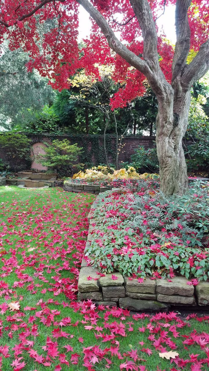 plant, tree, flower, flowering plant, growth, beauty in nature, nature, park, no people, tree trunk, trunk, day, park - man made space, red, freshness, pink color, outdoors, garden, tranquility, grass, flowerbed