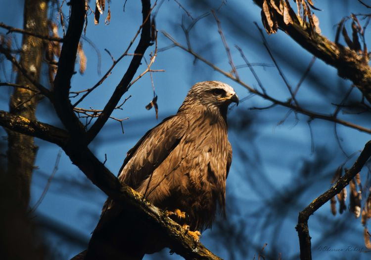 Low angle view of hawk perching on tree
