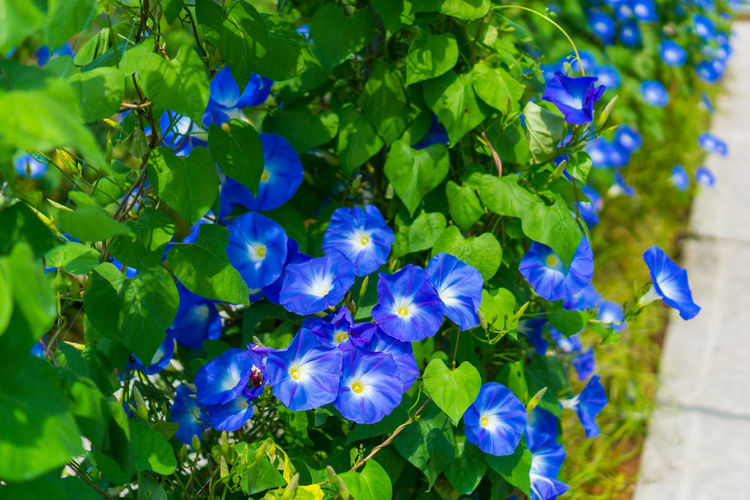 Leaf Blue Flower Beauty In Nature Plant Purple Green Color Nature Outdoors No People Close-up Growth Sunlight Day Plant Part Freshness Fragility Flower Head