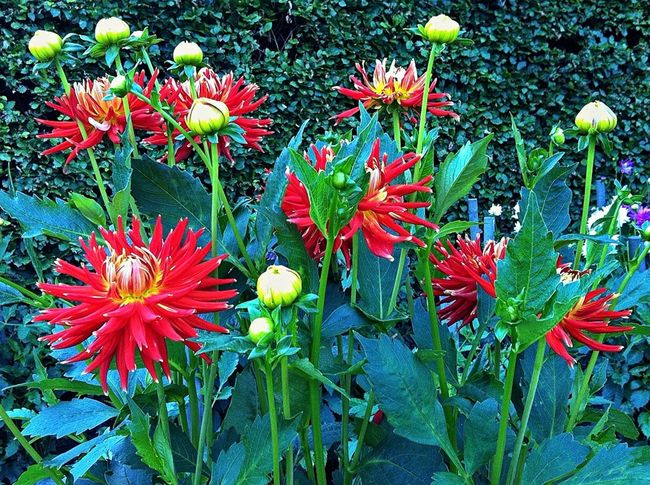 EyeEm Flower Beautiful Nature Flowers, Nature And Beauty Nature Nature_collection EyeEm Best Shots - Flowers Flowers,Plants & Garden 🌷 Flowers 🌹 Plants And Flowers Jopesfotos - Nature