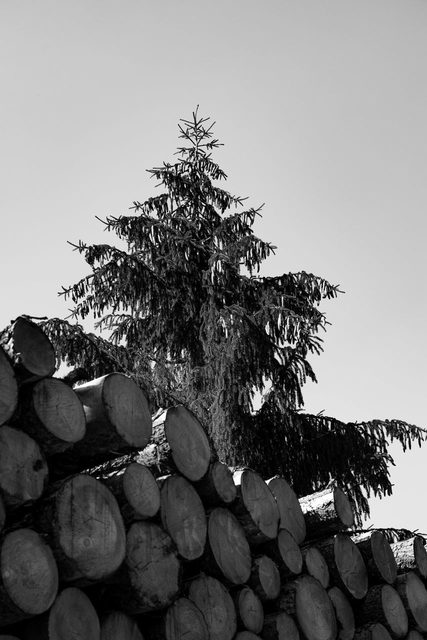 stack, log, woodpile, heap, tree, clear sky, timber, deforestation, forestry industry, pile, day, lumber industry, outdoors, large group of objects, no people, nature