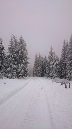 Snow Cold Temperature Winter Frozen Pine Tree Pinaceae Snowing Tree Forest Landscape Tranquil Scene Polar Climate Nature Beauty In Nature Scenics No People Outdoors Mountain Day Shades Of Winter