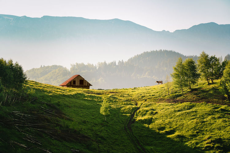 Scenic view of cottage and cow on field against mountain and sky in summer