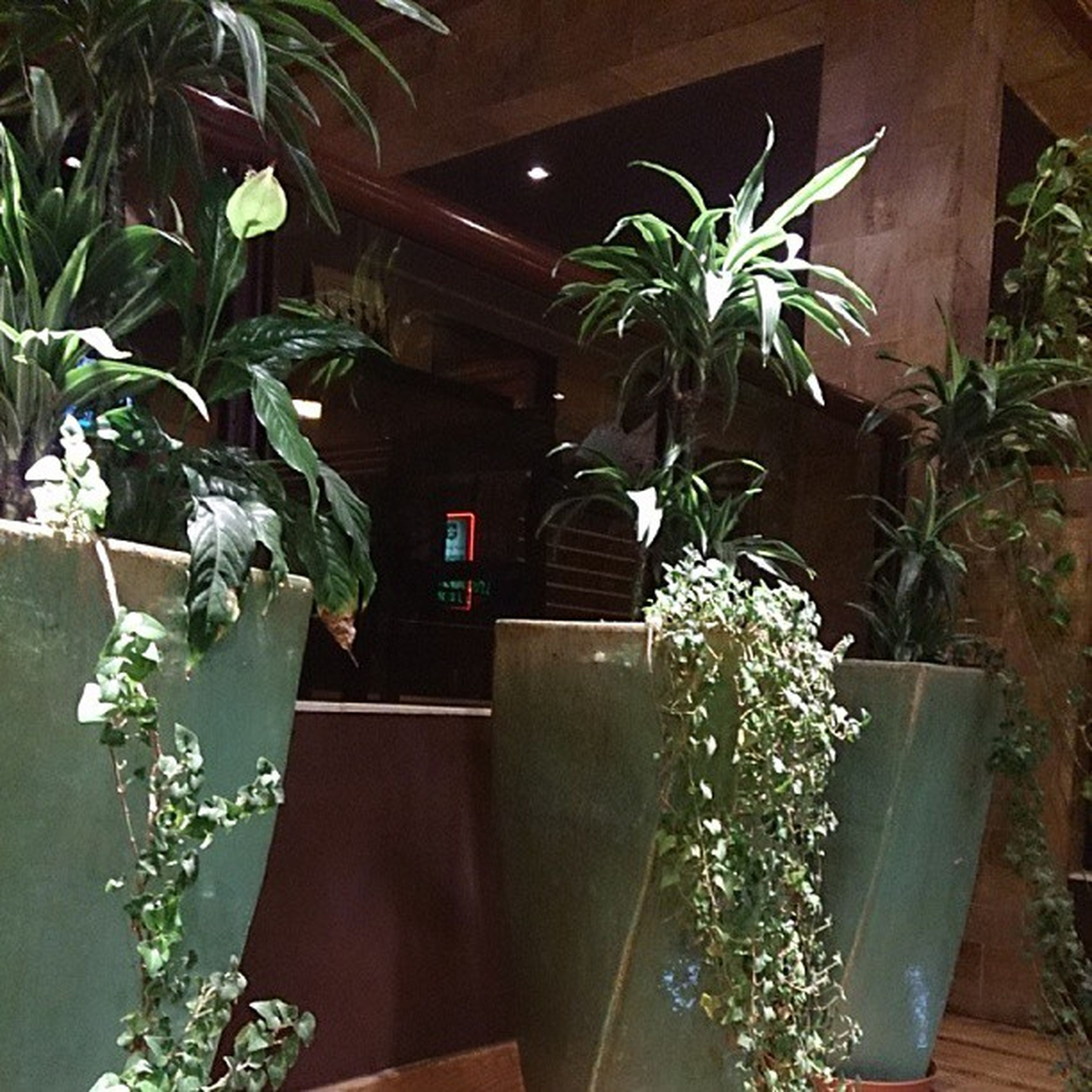 potted plant, indoors, plant, table, home interior, growth, house, vase, no people, flower, sunlight, decoration, wood - material, built structure, flower pot, front or back yard, wall - building feature, architecture, chair, leaf