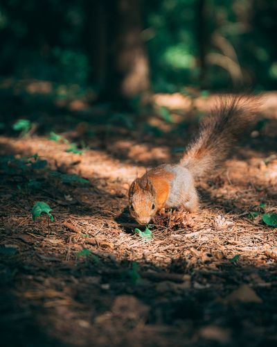 Close-up of squirrel on a field