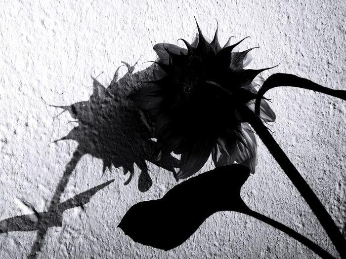 MINGLE Shadow