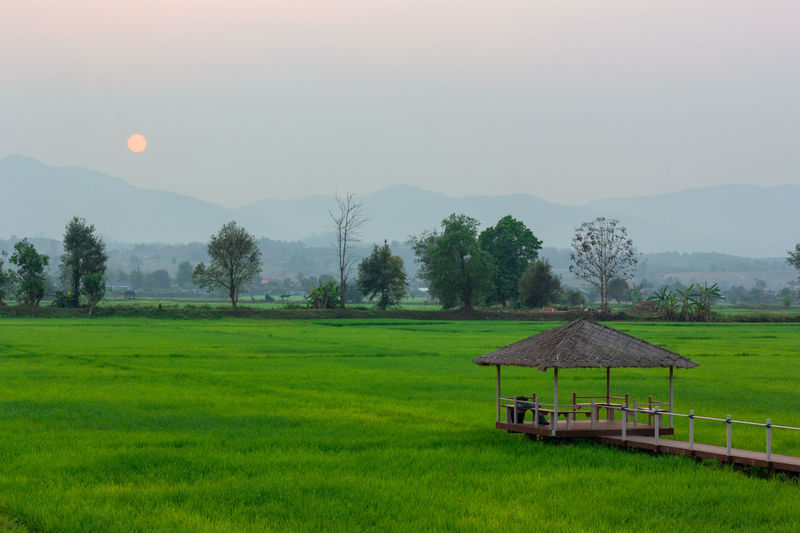 Landscape of Green rice field with mountain on background in sunset Plant Landscape Mountain Scenics - Nature Field Sky Environment Grass Tranquility Tranquil Scene Land Green Color Beauty In Nature Nature Rural Scene Tree Agriculture Farm No People Growth Mountain Range Outdoors
