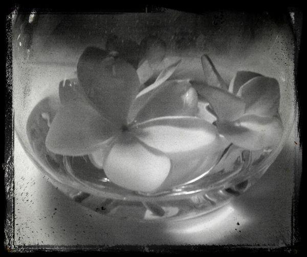 Frangipani In A Bowl