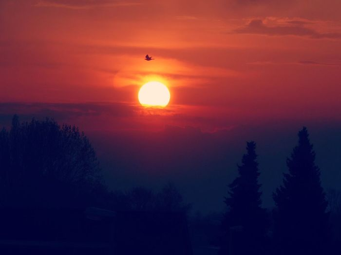 https://youtu.be/D5Y11hwjMNs Morningview For My Friends😚 Sunrise Today😍 Countryside Country Life Beauty At My Doorstep Lucky Me🦄 Beauty In Nature Springtime💛 Addicted To Sunrising Tree Silhouette Sun Tree Area Forest Sky Landscape Go Higher