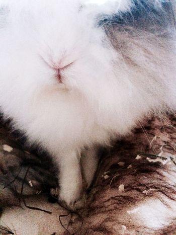 Pet Portraits One Animal Animal Themes Animal Hair Rabbit Angora Lovely