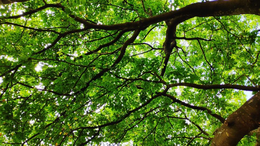 branches tree with green leaf.abstract background Forest Photography Anstract Tree Branch Forest Green Color Sky Tree Canopy  Directly Below Leaves Greenery Lush Foliage Green Plant Life Leaf Leaf Vein Flora