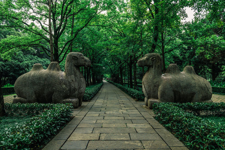 View of sheep in park