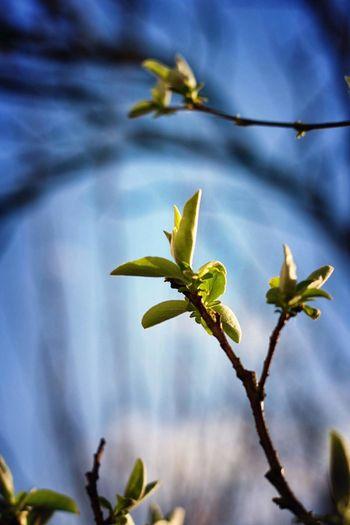 Flower Head Flower Tree Branch Leaf Close-up Sky Plant Green Color Botanical Garden Tropical Flower Botany Blossom
