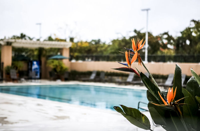 Balance Beauty In Nature Day Depth Of Field Field Focus On Foreground Fun Grass Growth Hotel Leaf Nature Outdoors Plant Recreational Pursuit RISK Sand Selective Focus Summer Swimming Pool Tranquility Water