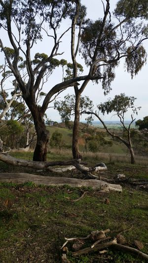 Tree_collection  Spring Gully Conservation Reservation South Australia