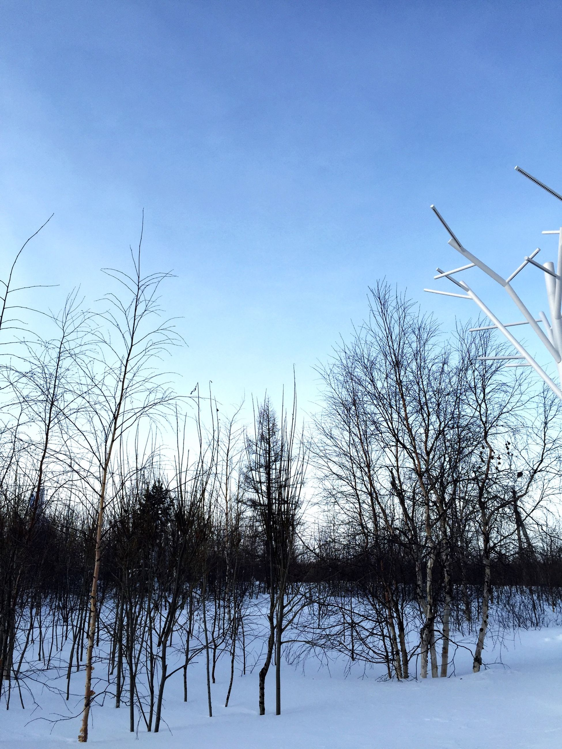 clear sky, winter, snow, cold temperature, tranquility, copy space, bare tree, tranquil scene, nature, blue, season, beauty in nature, tree, scenics, landscape, field, frozen, branch, outdoors, snow covered