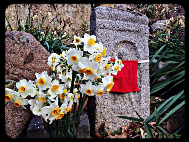 般若寺 石仏と水仙 The Purist (no Edit, No Filter) Taking Photos Temple Flowers