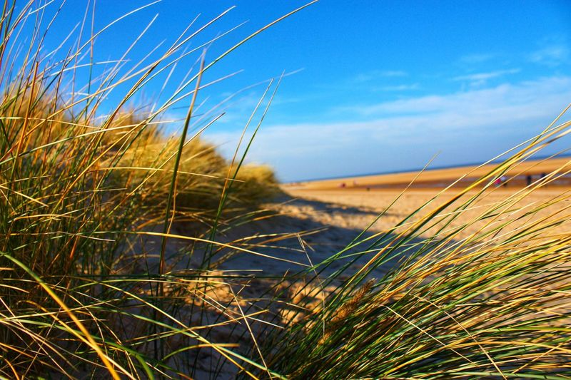 Beach days Sand Dune Sand Plant Growth Nature Sky Beauty In Nature Grass Day Tranquility No People Tranquil Scene Sunlight Scenics - Nature Outdoors Landscape