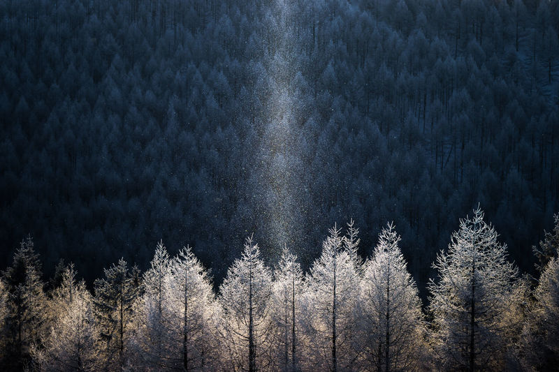 Beauty In Nature Cold Temperature Diamond Dust Forest Nature No People Outdoors Pine Tree Snow Sun Pillar Tree Winter