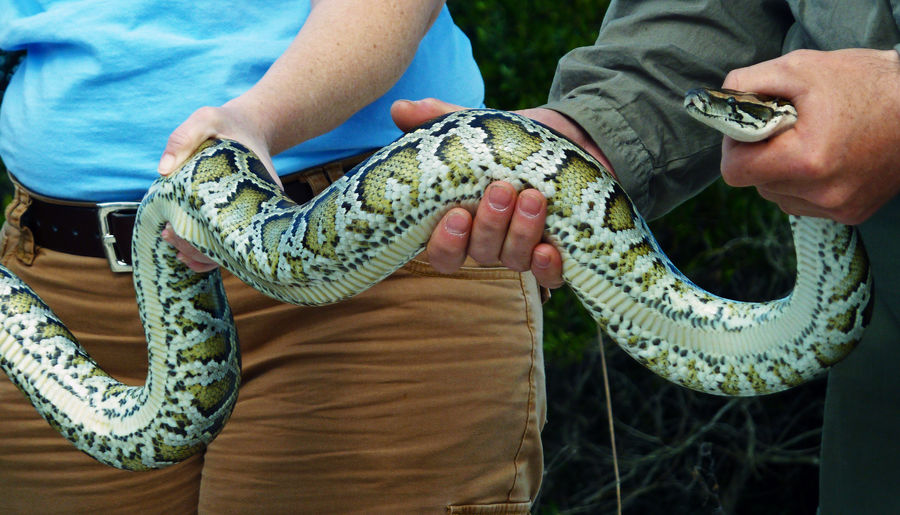 Low section of two people holding a snake