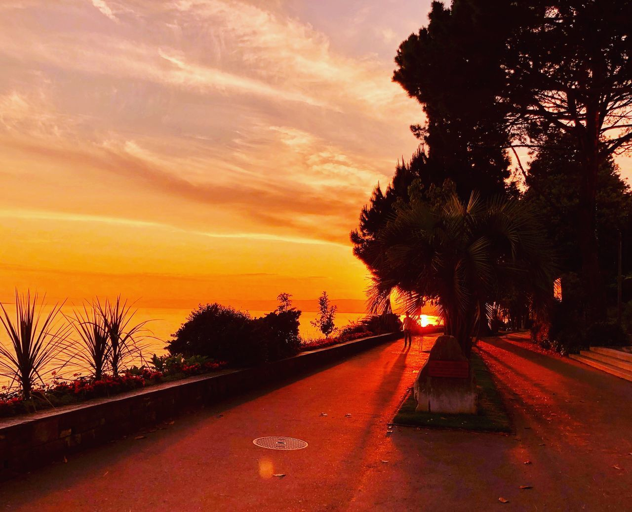 sunset, tree, sky, plant, transportation, orange color, nature, no people, cloud - sky, road, beauty in nature, the way forward, silhouette, car, direction, scenics - nature, outdoors, tranquility, tranquil scene, street