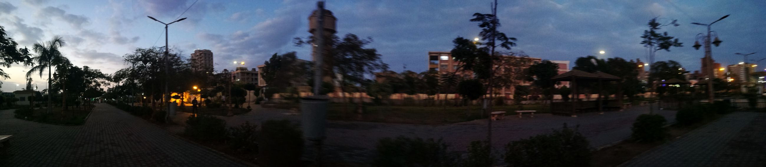 The garden of El Amal EyeEmNewHere Ground Growth Green Winter Tree Night Sky Panoramic Pinaceae Outdoors No People Nature