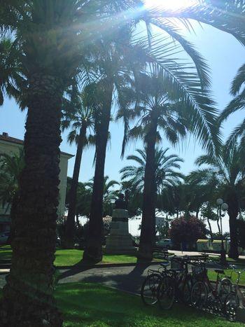 Vacation mode ON Italy Liguria Palm Trees Sunlight