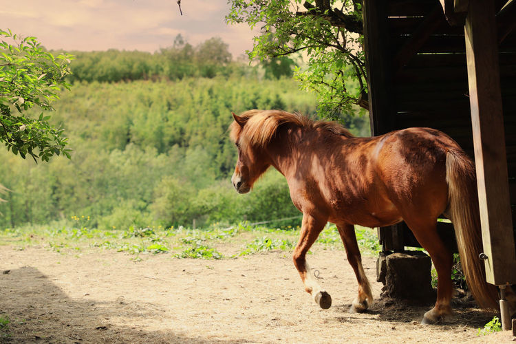 Animals In The Wild Farmland Field Grass Horses Nature Oberberg Tree Trees Animal Animal Themes Animal Wildlife Horse Outdoors Portrait Of An Animal Silence Sky Trees And Sky Weed