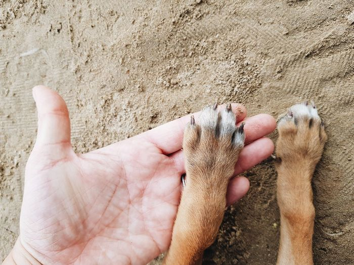Puppy paws Dog Pets Pet Adoption Dog Adoption Puppy Paws  Puppy Sand Beach Human Body Part Day Outdoors High Angle View Real People