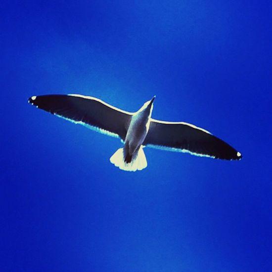 Soaring! Gulls Flyinggull Soaring Soaring Up Above Bluesky LoveBirds ❤ Lovebirds