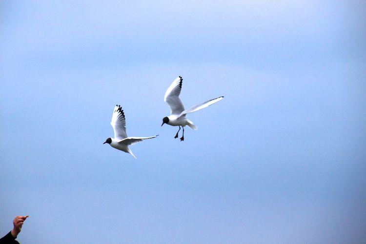 Seagulls Seemöwe Möwe Birds Bird Bird Photography Birdwatching Open Edit Tadaa Community Getting Creative Two Is Better Than One