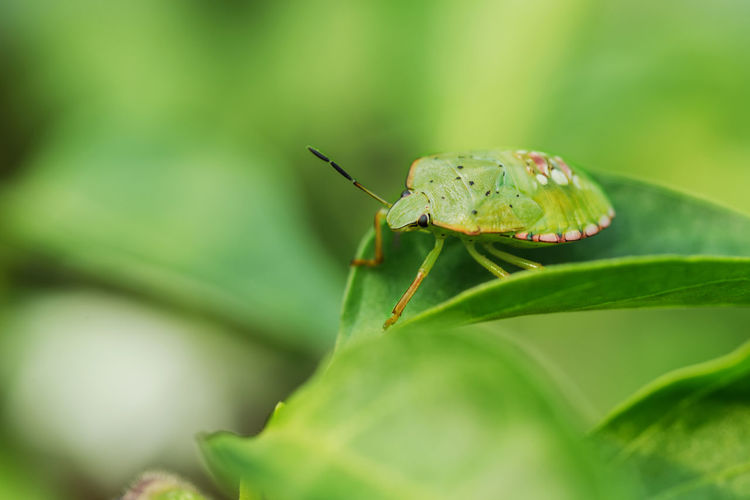 One nice bug on