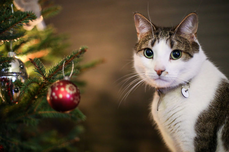 Close-up of a cat on christmas tree