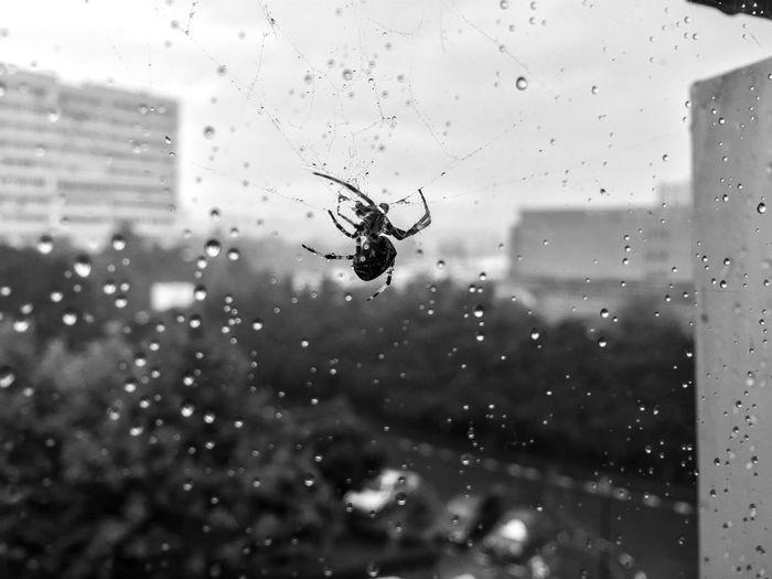 Close-up Creepy Dew Drop Glass Indoors  Rain Sky Spider Spider Web Transparent Water Wet Window