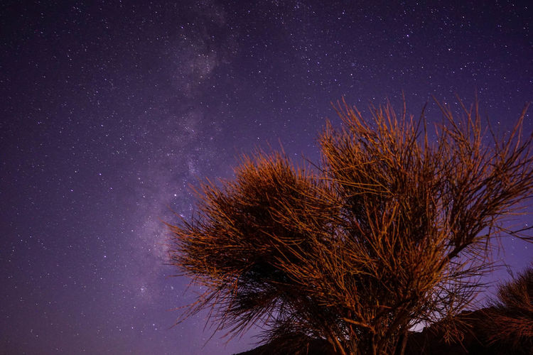 Iran Travel Destinations Travel Photography Nomadic Shia Community Travel Nomadic Life Star - Space Night Astronomy Space Plant Low Angle View Scenics - Nature Star Tree Nature Galaxy Tranquility Beauty In Nature Star Field Growth Tranquil Scene Infinity Outdoors