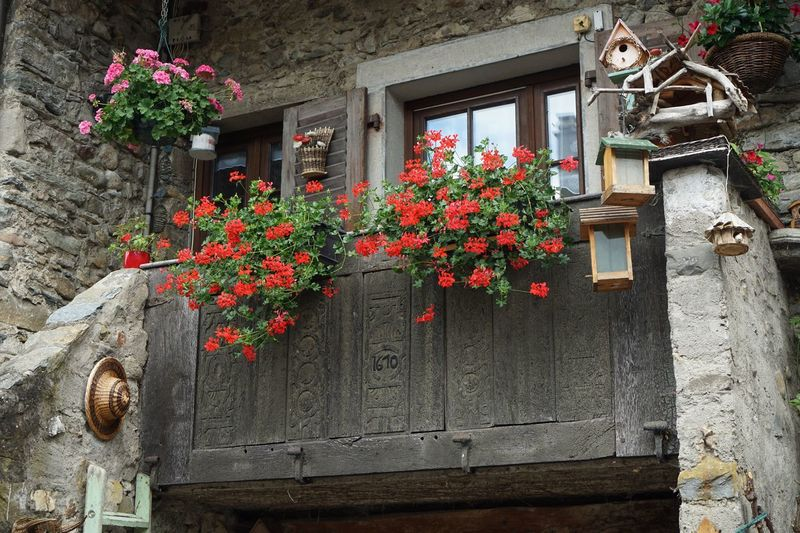 Flower No People Window Box Outdoors Plant Building Exterior Day Architecture Nature History Yvoire, France Yvoire Built Structure Door Architecture