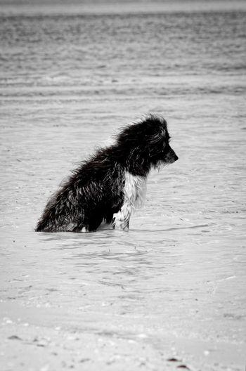 Just thinking Blackandwhite One Animal Animal Animal Themes Mammal No People Domestic Animals Vertebrate Water Pets Dog Sea