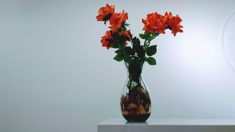 Close-up of flowers in vase against white background