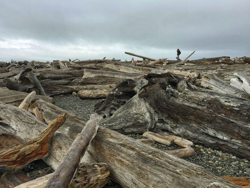 Driftwood at ruby beach Washington Outdoors Day One Man Only Only Men People One Person Sky Nature Dead Trees Logs Wood Art Brown Branch Landscape Wood Texture