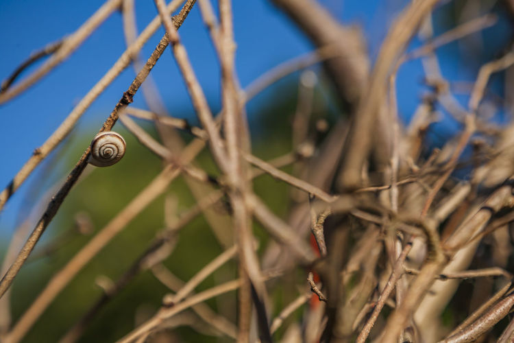Day Close-up No People Selective Focus Nature Plant Focus On Foreground Mollusk Invertebrate Snail Gastropod Metal Outdoors One Animal Security Shell Safety Animal Animal Wildlife Animal Themes