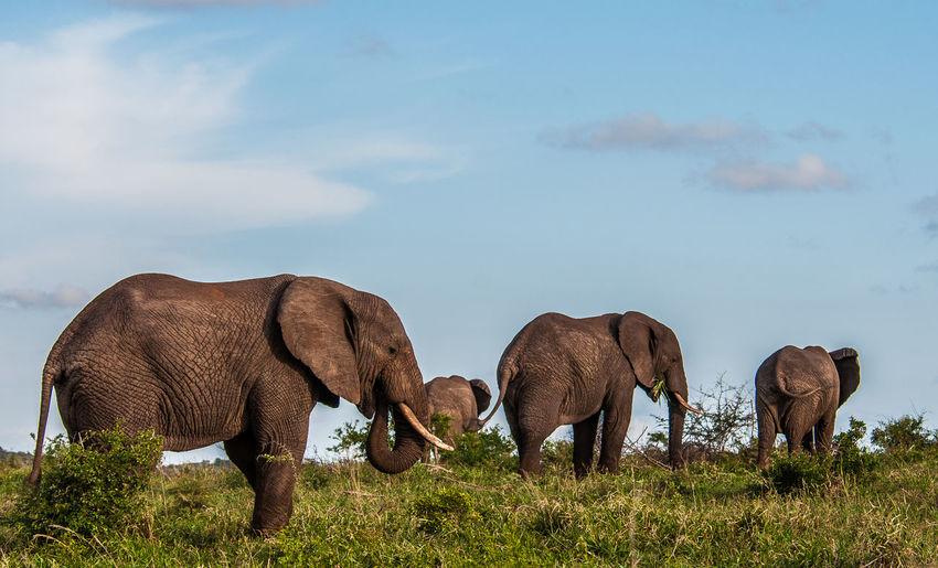 D300s Discover Your City Fun Nikon Random Travel Wanderlust Explore Southafrica