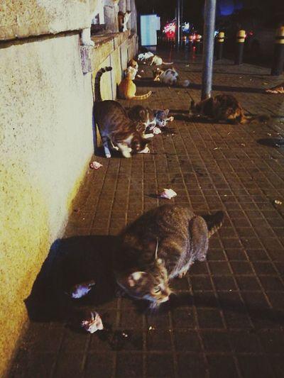 Domestic Animals Animal Themes Cat Street