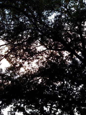 Tree Nature Tree Canopy  No People Outdoors Leaves