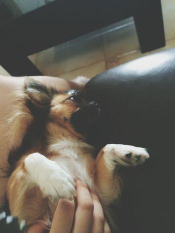 好幸福的狗狗哦...爱惨...:)
