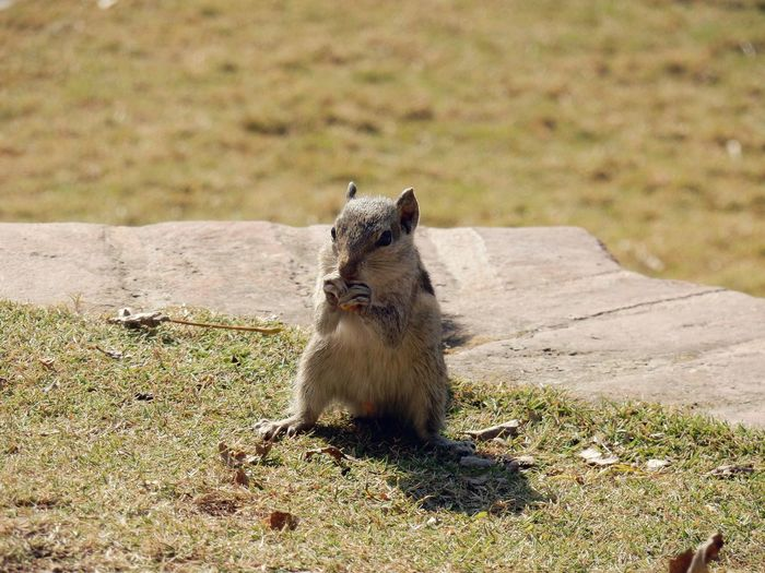 little squirrel at garden of dreams #Squirrel #gardenofdreams #nepal #travel #kathmandu One Animal Animals In The Wild Animal Nature Day No People Sitting Outdoors