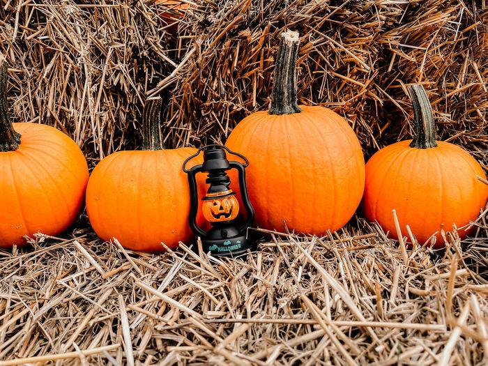 View of pumpkins against orange sky